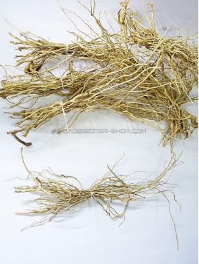 senggani roots