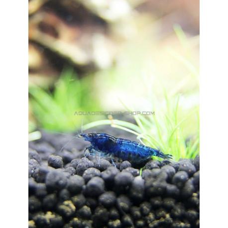 Blue Velvet blue dream