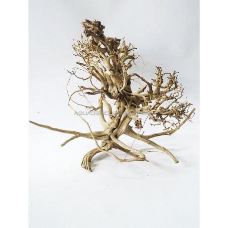 Busshu roots XL01
