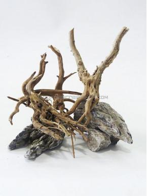 3 racines nano forest lot 3