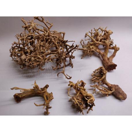 Branches de bonsaï
