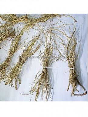 Senggani roots Mini