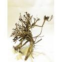 Busshu roots XL04