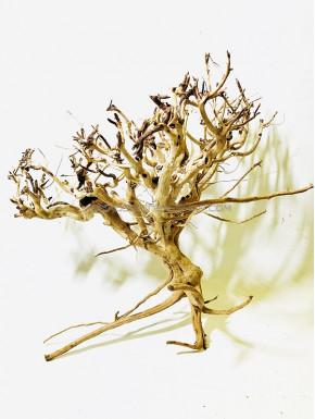 Busshu roots XL03