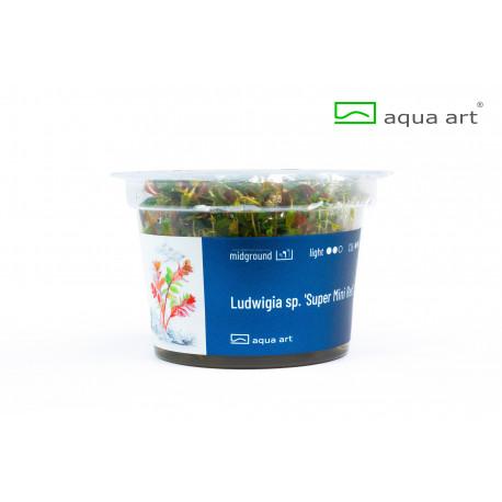 Ludwigia sp. 'Super Mini Red' in vitro