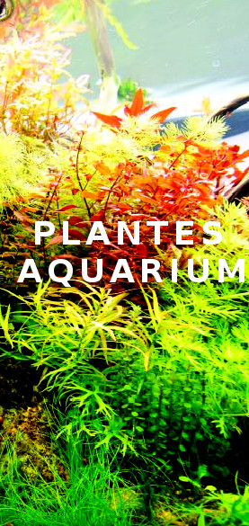 https://www.aquadesigner-shop.com/12-plantes-aquarium